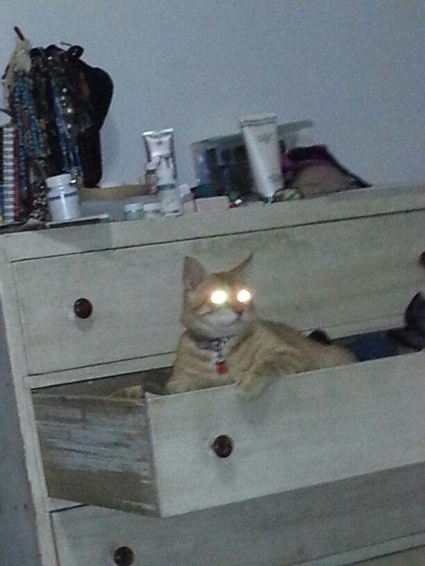 Linterna felina.