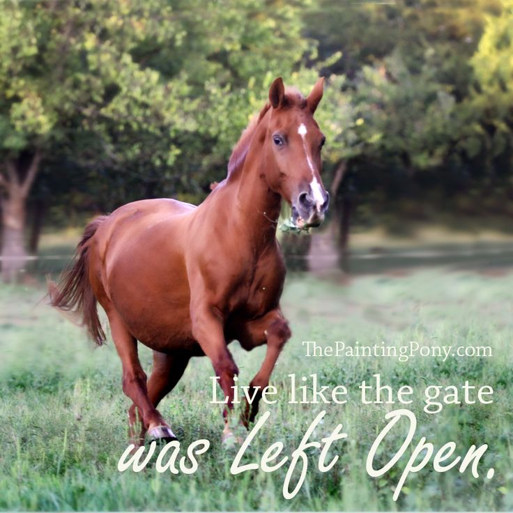 Live like the gate was left open - equestrian barn life horse lover quotes