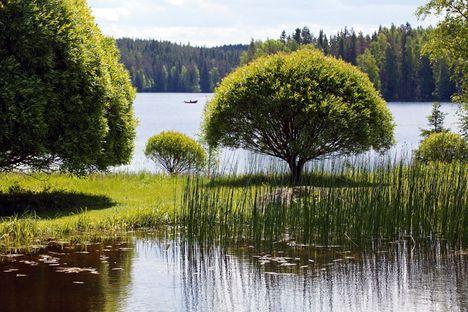 Puu joka pihalle: Terijoensalava