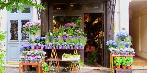 entrai nel negozio, mi guardai un po' intorno tra rose e garofani, petunie e violette...