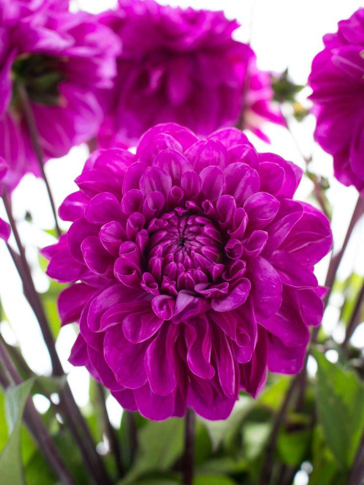 die besten 25 lilafarbene hochzeitsblumen ideen auf pinterest lila brautstr u e lila. Black Bedroom Furniture Sets. Home Design Ideas
