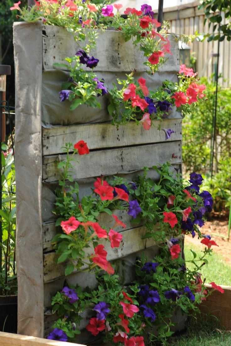 My petunia pallet garden bed gardening pinterest gardens pallets garden and petunias - Vertikaler garten diy ...