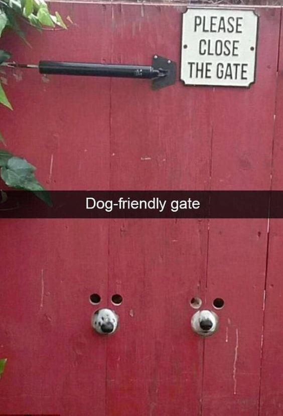 Эти фото собак заставили их владельцев улыбнуться. Вы тоже не устоите | Ink