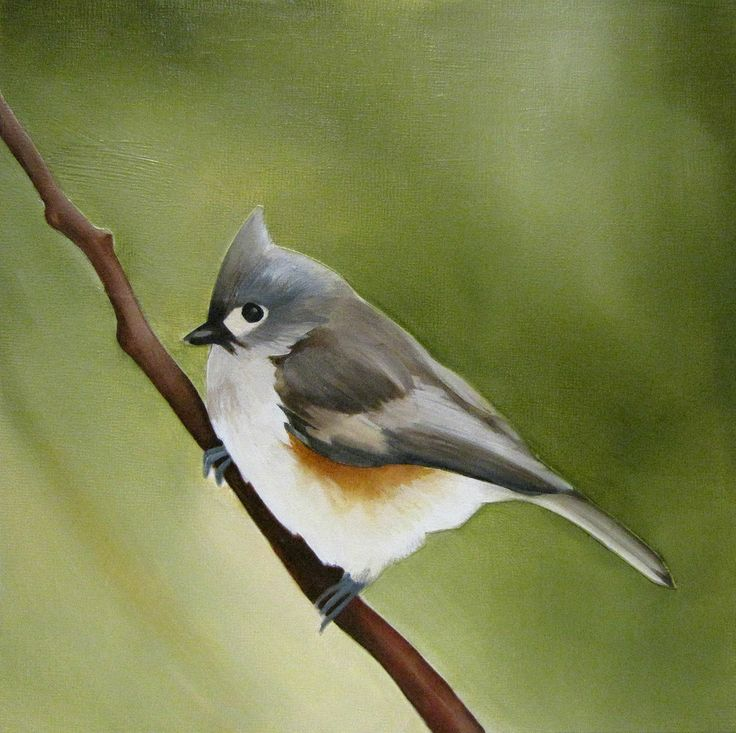 Tufted Titmouse  Acrylic on Panel, 8x8 inches www.amyshawley.com