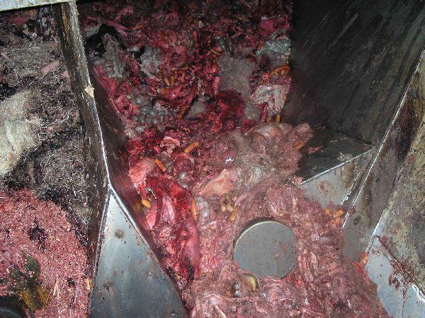 牛のエサに牛や○○が アメリカ産牛肉の実態|牛が屠殺されると、その重量の半分は食用にはならない。つまり腸や内容物、頭部、ひづめ、そ して角などで、骨や血も「食べられない」。そこでこれらは、「レンダリング・プラント」(動物性脂肪精製工場)というところに運ばれる。そして巨大攪拌機 (かくはんき)に投げ込まれる。ついでに言うと、「病気で死んだ牛は丸ごと放り込まれる」。