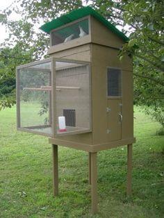 small pigeon loft design ideas, pigeon coop