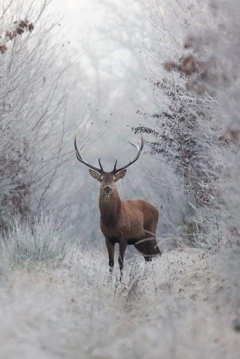 """Frozen For A Moment."" (Photo By: Nicolas Le Boulanger.)"