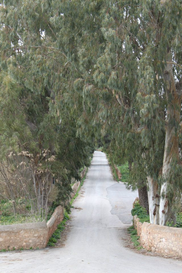 The tree lined lane to the monastery