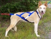 Sled dog pulling harness