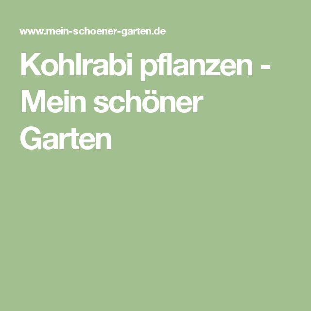Kohlrabi pflanzen - Mein schöner Garten