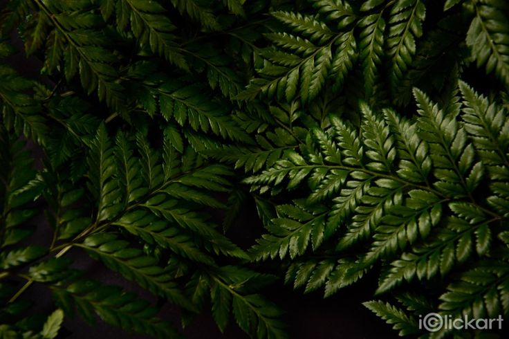 #green #studio #photography #stockphoto #natural #background #npine #iclickart #click_your_heart