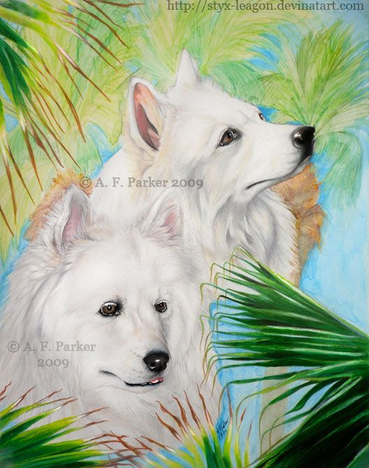 Traditional mixed media pet portrait commission of two white Samoyed dogs and palm fronds.