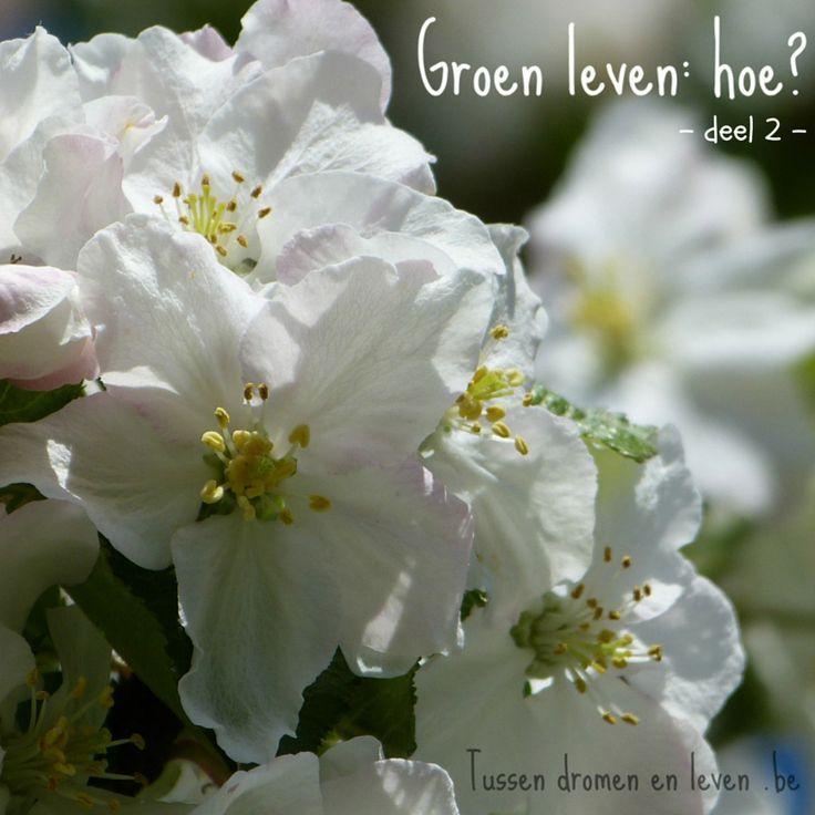 Groen leven in 3 stappen uitgelegd!