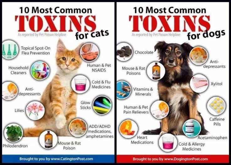 Pin by Martha Hall on Penny Pet poison, Pet mice, Dog
