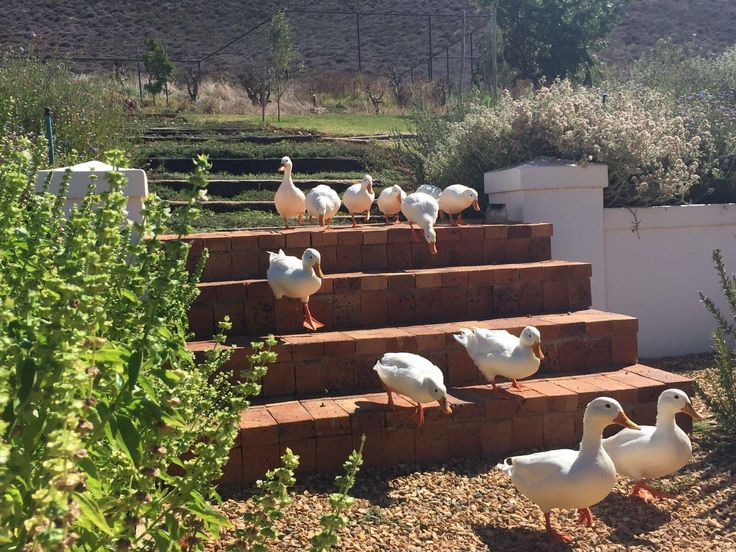 Special on all levels - Review of PenHill Manor and Self-Catering Cottages, Worcester, South Africa - TripAdvisor #PenHill