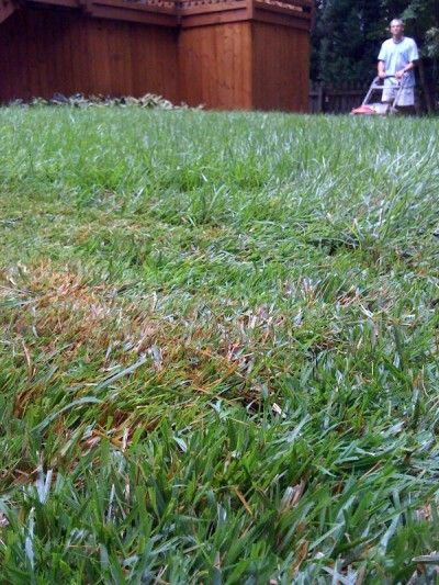 Zoysia Diseases – Tips For Dealing With Zoysia Grass Problems