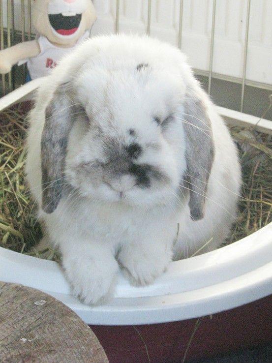 Train your pet rabbit