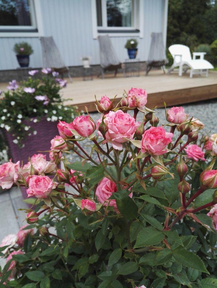 Kesä ja kukkaset