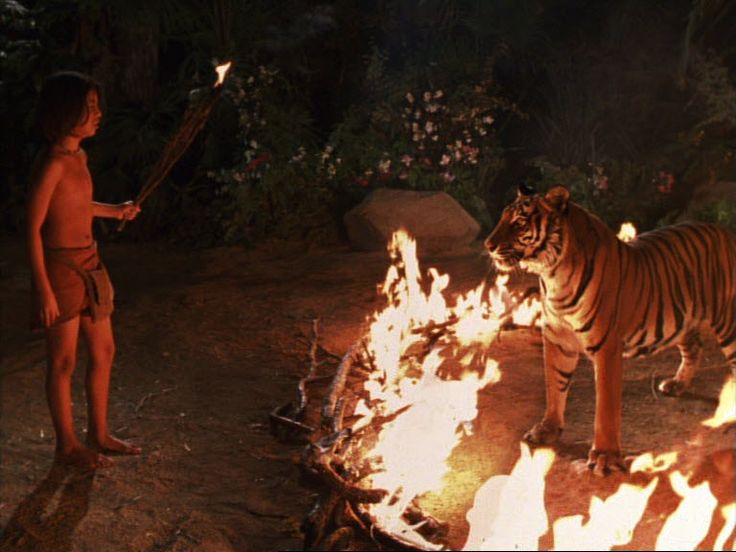 17 Best images about Brandon Baker-Mowgli on Pinterest ...