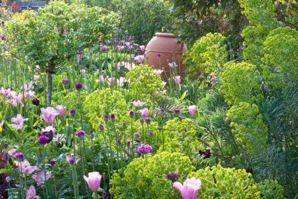 Spring Combination Ideas Bulb Combinations Plant