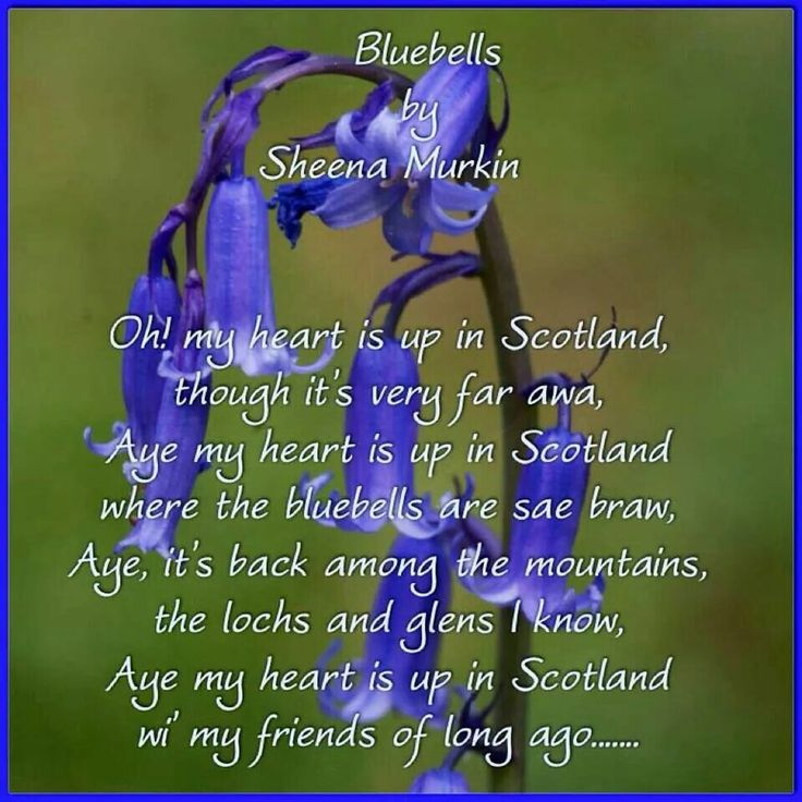 Bluebells Scottish Sayings Proverbs Poems Blessings Pinterest