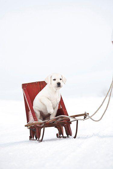 Holiday pup.