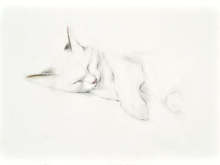 Cat Napping Limited Edition Giclee Print of my by KellasCat