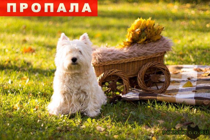 Пропала собака г.Санкт-Петербург http://poiskzoo.ru/board/read32174.html  POISKZOO.RU/32174 Пропала собака ... Маленькая, белого цвета, лохматая, зовут Клёпа, без ошейника, убежала в удельном парке  РЕПОСТ! @POISKZOO2 #POISKZOO.RU #Пропала #собака #Пропала_собака #ПропалаСобака #Санкт #Петербург #СанктПетербург #СПБ #Санкт_Петербург