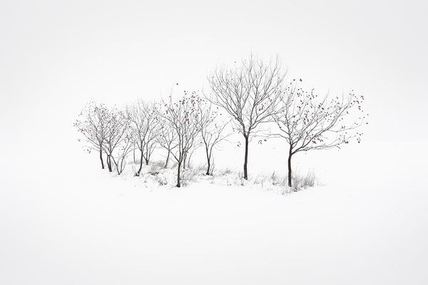 Lumen, by Akos MajorPhotographers, Photos, Winter White, Art, White Christmas, Lumen, Akos Major, Ákos Major, Minimalist Photography