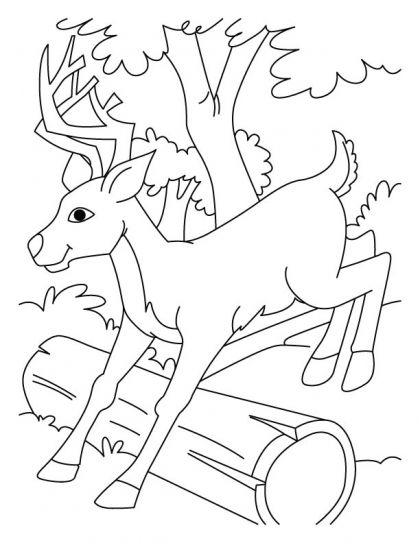 Jumping deer coloring pages | Download Free Jumping deer coloring pages for kids | Best Coloring Pages