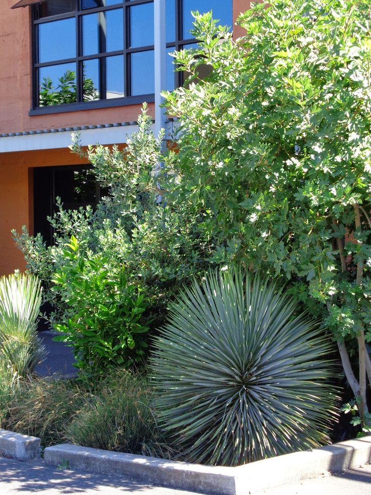 70 best Rain Garden Bioswale images on Pinterest Rain garden