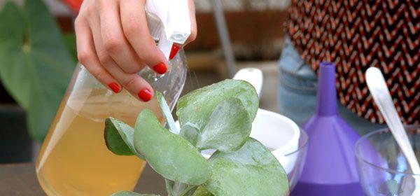 Veja aqui como combater ácaros, pulgões e lagartas com um inseticida natural para jardim e horta, com um vídeo mostrando o passo a passo da receita!