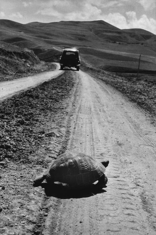 Turtle Crossing The Road In Turkey 1995 Photo: Marc Riboud