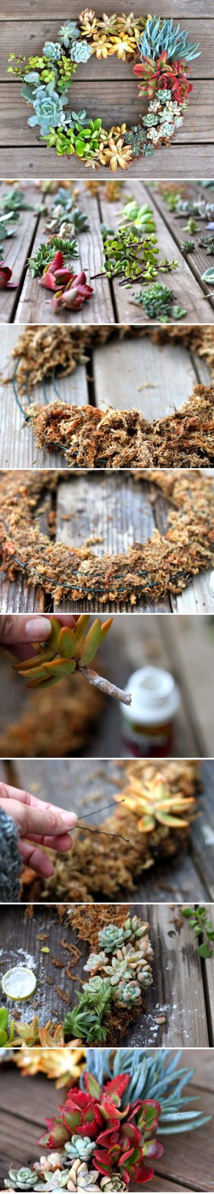 Succulent Wreath. Ok, this does not adequately make me understand how to do this, but I really want to.