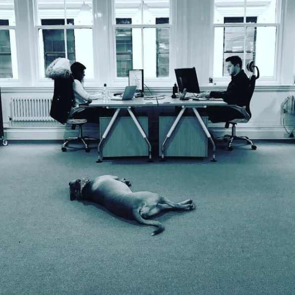 We saw our newest member of the team join us... with questionable work ethic... .