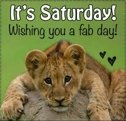 Lion Saturday
