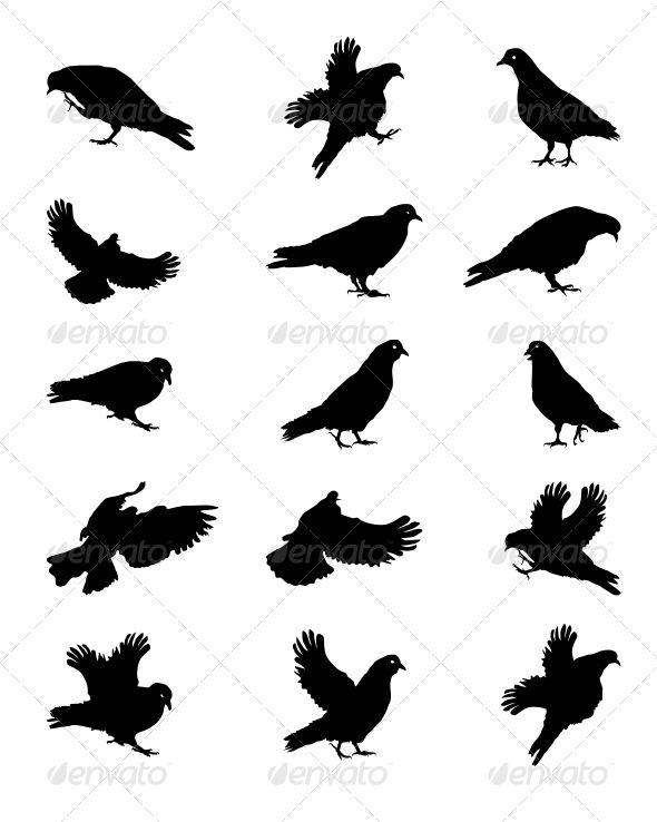 Silhouette of Pigeons Isolated on White Vector Ill  #GraphicRiver