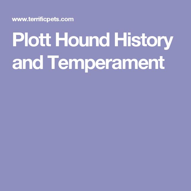Plott Hound History and Temperament
