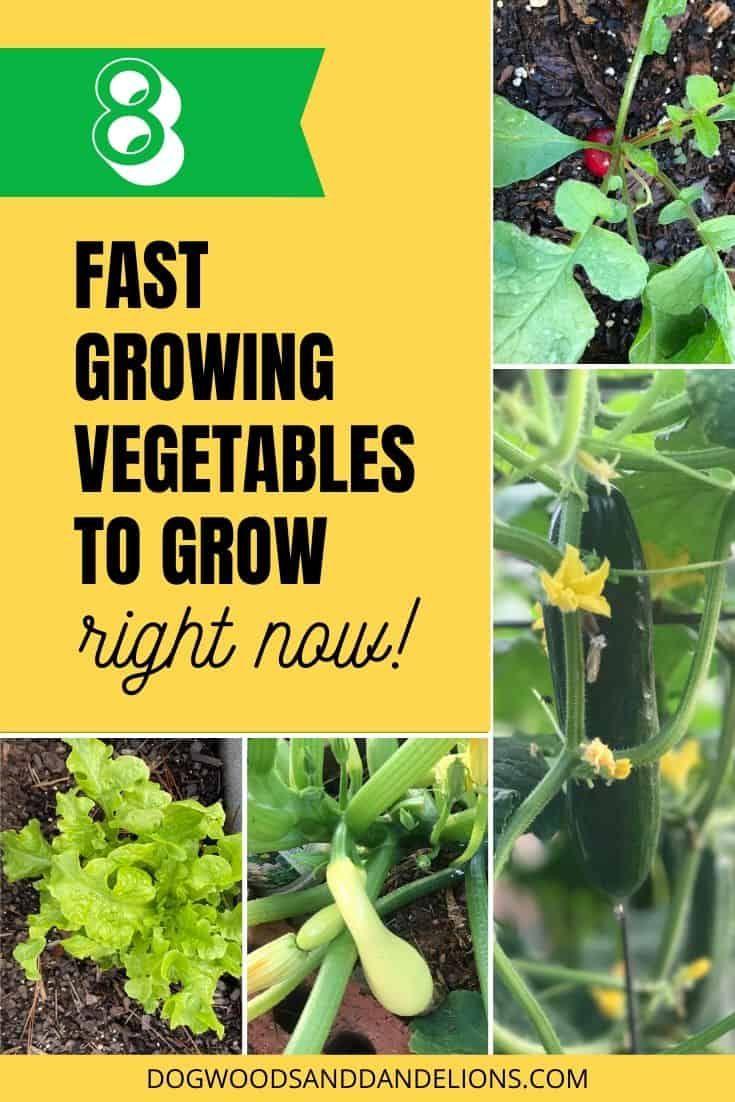 Fast Growing Vegetables Growing Vegetables Fast Growing
