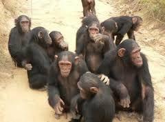 Výsledok vyhľadávania obrázkov pre dopyt bonobovia
