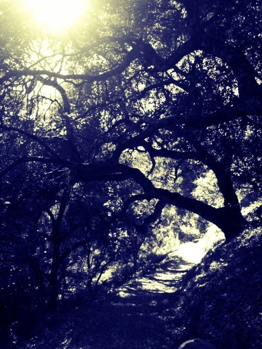 Hiking. Picchetti Ranch, Cupertino, CA