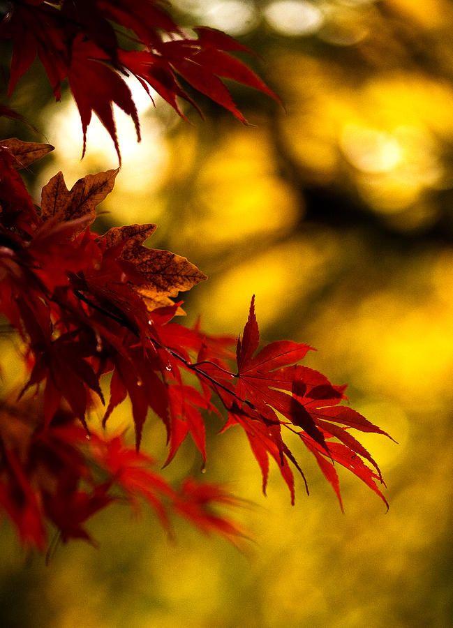 leaves by Mike Reid