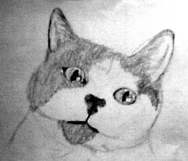 schets van een kat