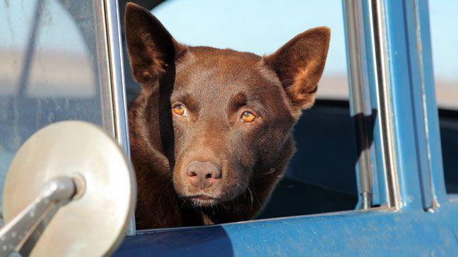 Red Dog, one of my idols