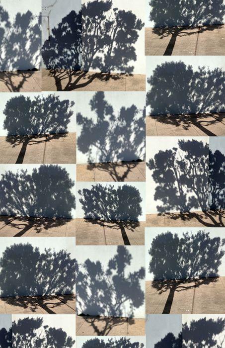the careful study of the shadowy world of trees | katja ollendorff #art