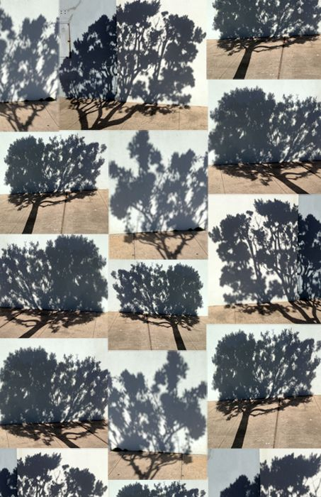 the careful study of the shadowy world of trees | katja ollendorff #art