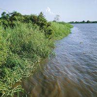 Vegetación hidrófila a orillas del río Magdalena. Lakeshore