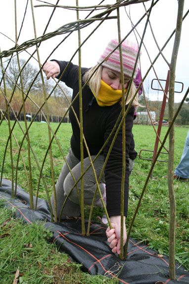 Tried your hand at willow weaving? Here at AG we show you how to create an attractive living screen fence for your garden