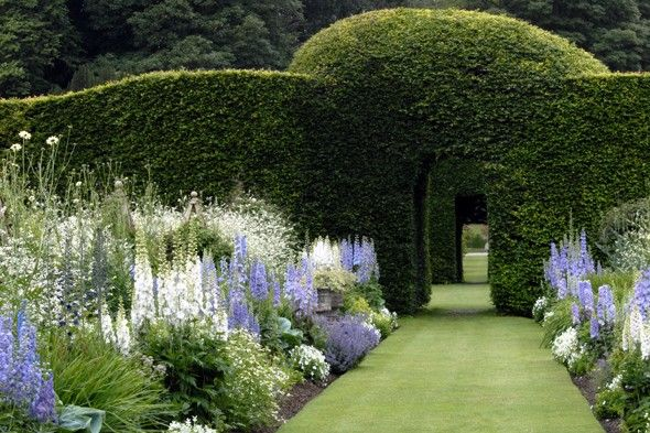 Gardens at Levens Hall in Kendal, UK The formal hedge serves nicely as backdrop for the loose planting of the blue and white and green colour scheme