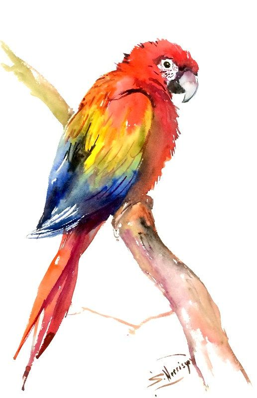 Scarlet Macaw Original watercolor painting bright by ORIGINALONLY                                                                                                                                                                                 More